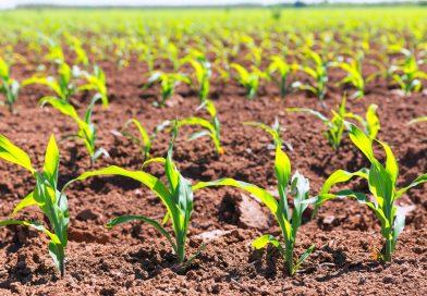 22 de junio: Día mundial del suelo y tierra fértil